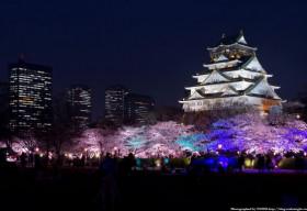Osaka – Xứ sở hoa anh đào