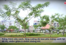 Câu chuyện cuộc sống: Có nên đốn hạ cây xanh trong mùa mưa bão