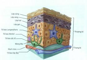 Ứng dụng công nghệ tế bào gốc trong dưỡng trắng, điều trị và ngăn ngừa nám