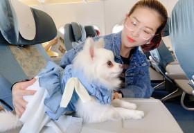 Kiều Linh 'chịu chơi'chi gần 13 triệu chỉ để cún cưng đi máy bay