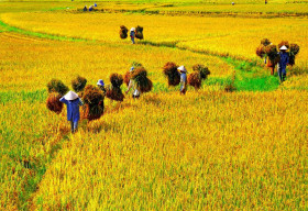 Cùng 'Ngày Việt Nam tại Thuỵ Sỹ năm 2021' khám phá những điều thú vị khi du lịch Việt Nam