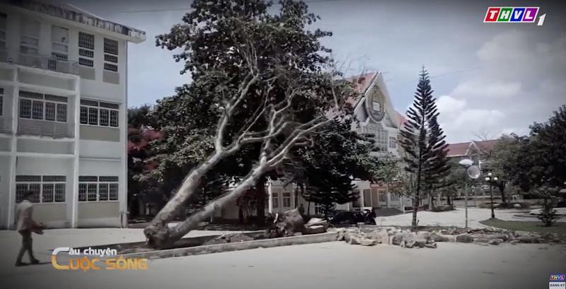 cau chuyen cuoc song 1 Câu chuyện cuộc sống: Có nên đốn hạ cây xanh trong mùa mưa bão