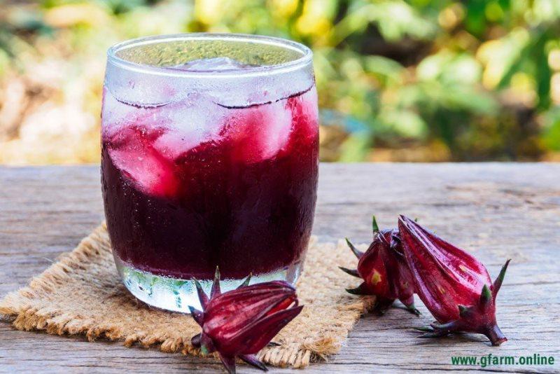 Hibiscus – Ruby của sức khoẻ 3 Hibiscus– Ruby của sức khoẻ, thảo mộc được nhiều quốc gia ưa chuộng